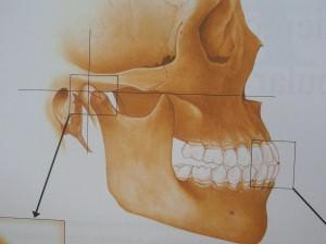 Articulación temporomandibular, ATM
