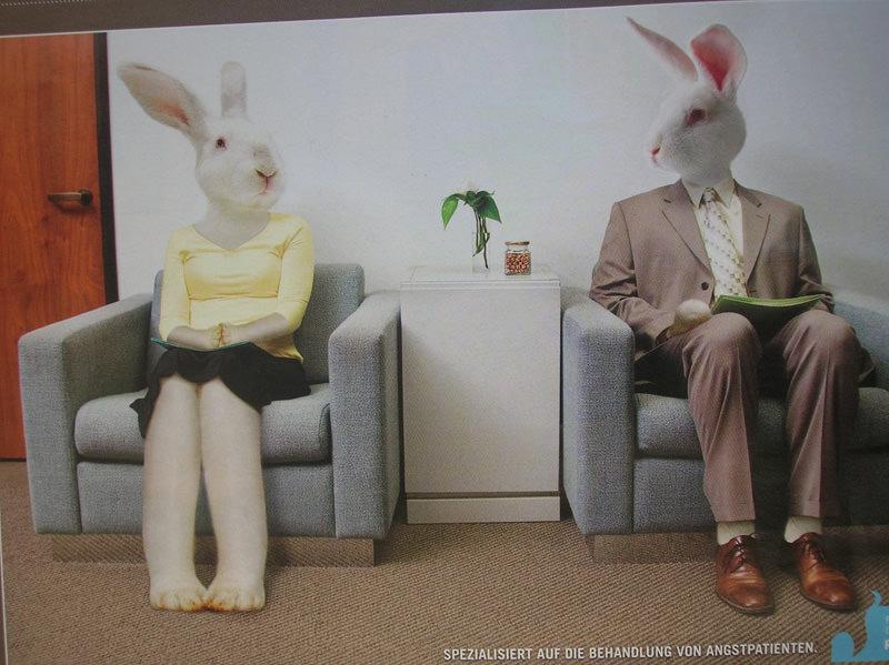 Conejos en sala de espera
